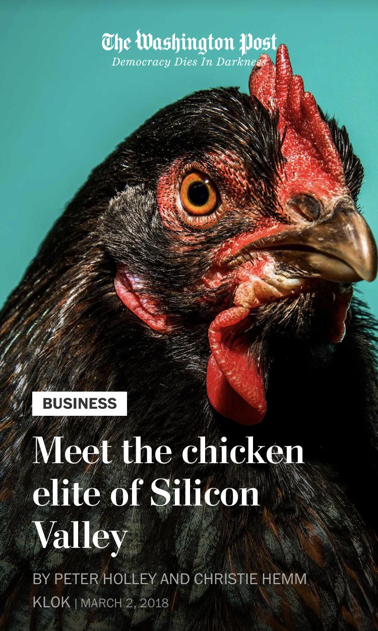 Die Washington Post über das neue Statussymbol des Silcon Valley: Hühner im Hinterhof