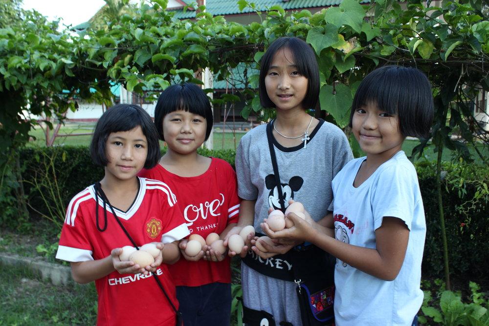 Barna hjelper til med å plukke 30-40 egg hver dag
