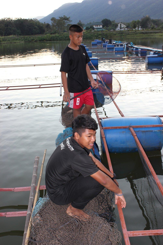 Gutter som hjelper til med foring av fisk
