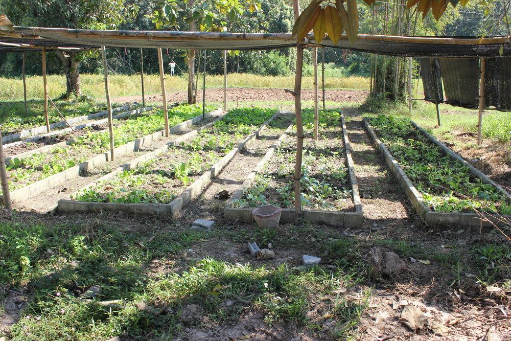 Sunne grønnsaker i anmarsj