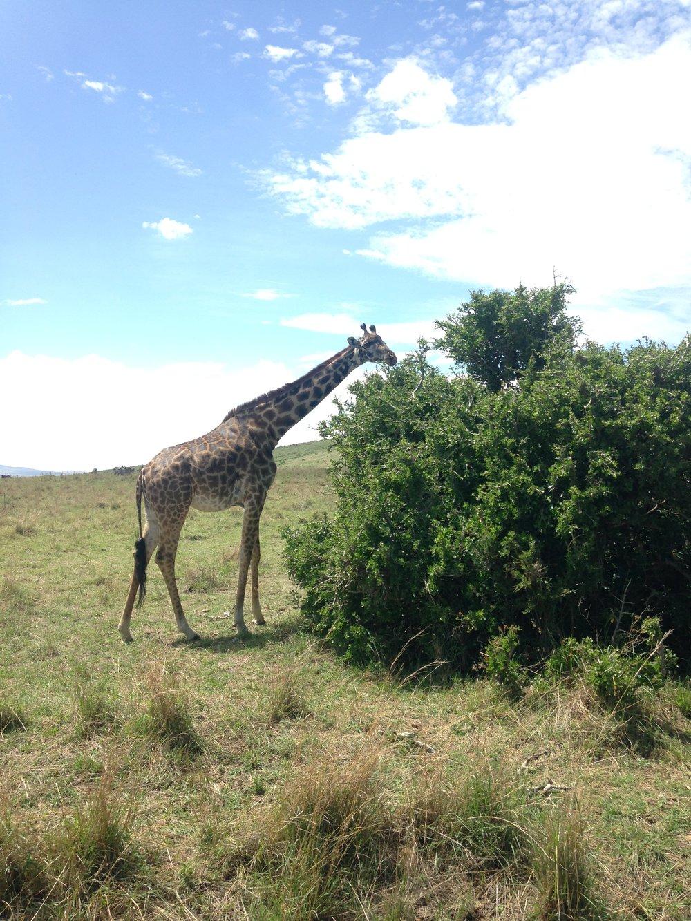 Safari @ Masai Mara