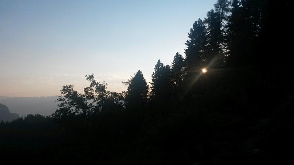 Sonne in den Bäumen