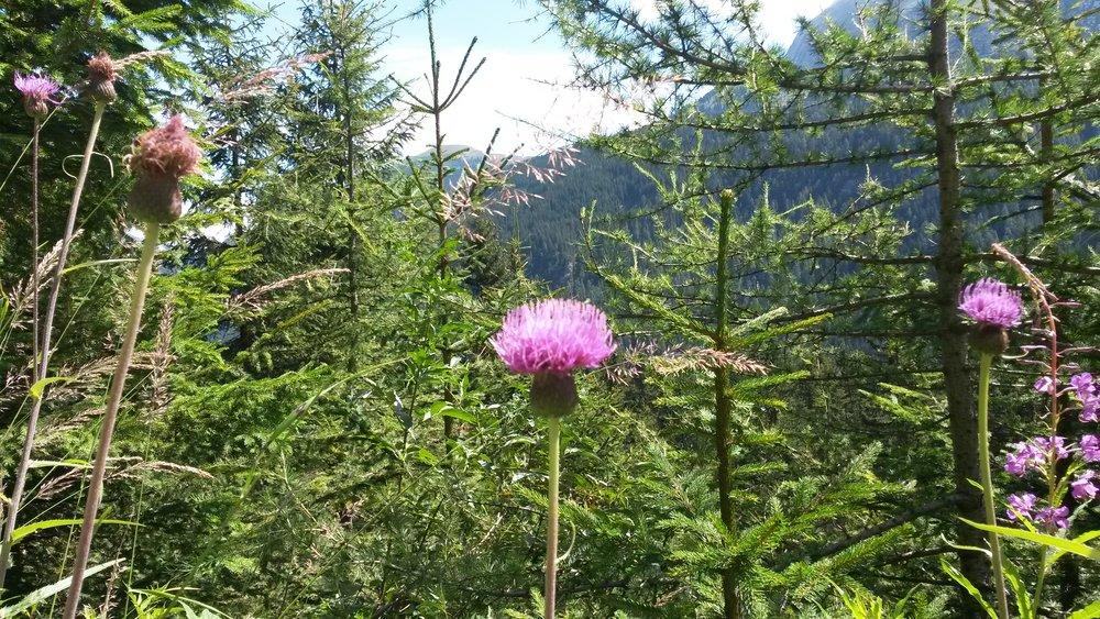 Natur - Blumenvielfalt