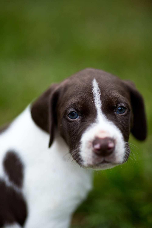 puppies-25.jpg
