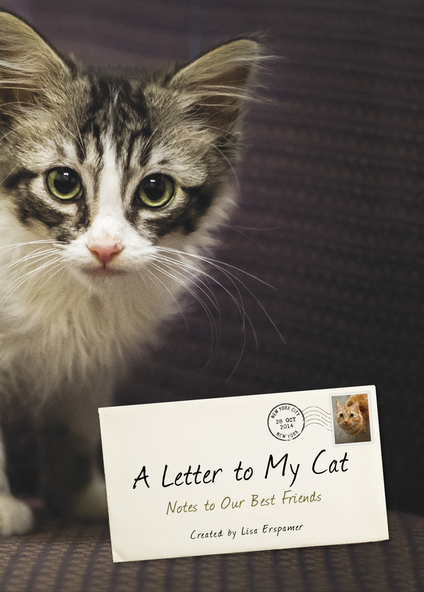 Letter-To-My-Cat