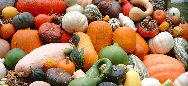 WCA Harvest Potluck