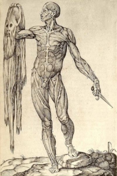 The early 1500's, mid-Renaissance, was in many ways the beginning of knowing the body through dissection, i.e. anatomy (literally: to cut up). The work of Andreas Vesalius, oft' referred to as the father of modern anatomy, as his contemporaries, like this anatomist, Juan Valverde de Amusco, who made this artful rendition of man comtemplating himself from outside. I was the student, again, of this episode's guest all last week in AZ in a fresh-tissue cadaver dissection.