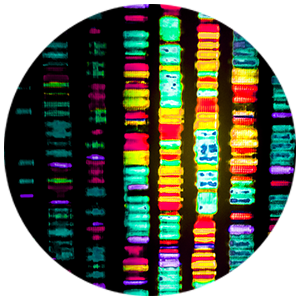 Genetics DNA Biometrology