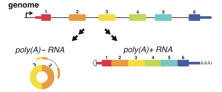 Genetics DNA JIMB