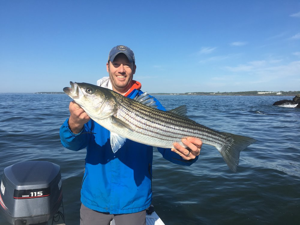 Adam with a gorgeous bass taken in Casco Bay.