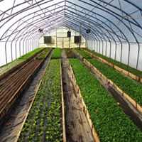 Chicano Sol Farm Thumbnail.jpg