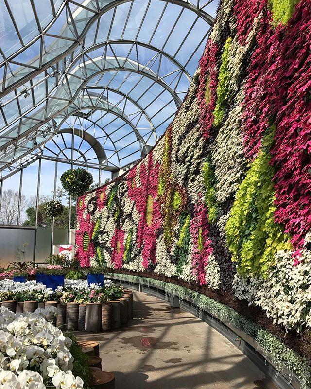 The Southern Hemispheres largest interior green wall! . . . #botanicculture #greenlife #plantinspiration #greenwall #theroyalbotanicgardensydney #thecalyx #perennials #livingwithgreen #plantsofinstagram
