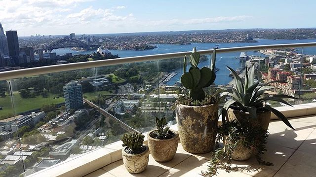 Not a bad way to spend a sunny morning over looking Sydney. Maintaining a clients plants and pots installed by us in Darlinghurst. . . . #botanicculture #cactus #succulents #sydneyplants #balconyplants #gardenmaintenance #gardenservices #darlinghurst #livingwithgreen #plantsofinstagram #fullsunplants #sydneywinter #picoftheday