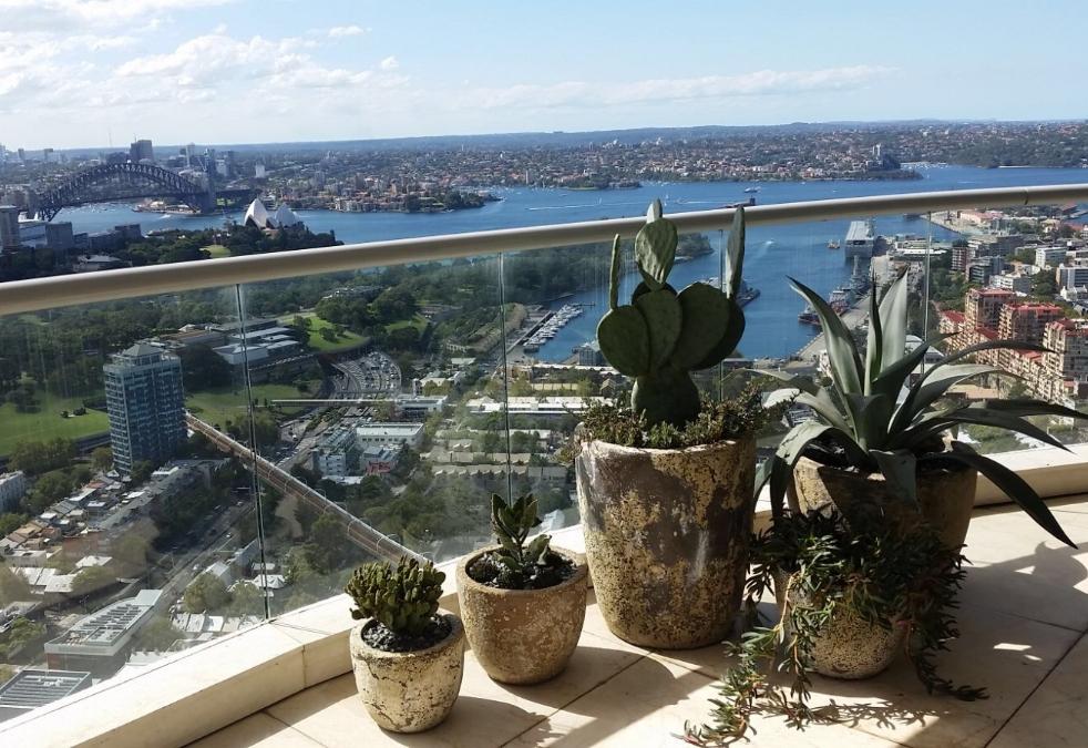 Darlinghurst Cactus Garden Design - 4 Cactus Pot Plants with view of Sydney