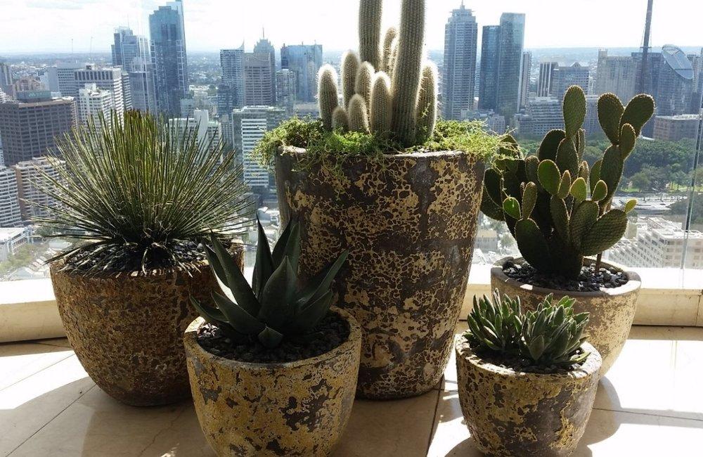 Darlinghurst Cactus Garden Design - Cactus Pot Plants with view of Sydney