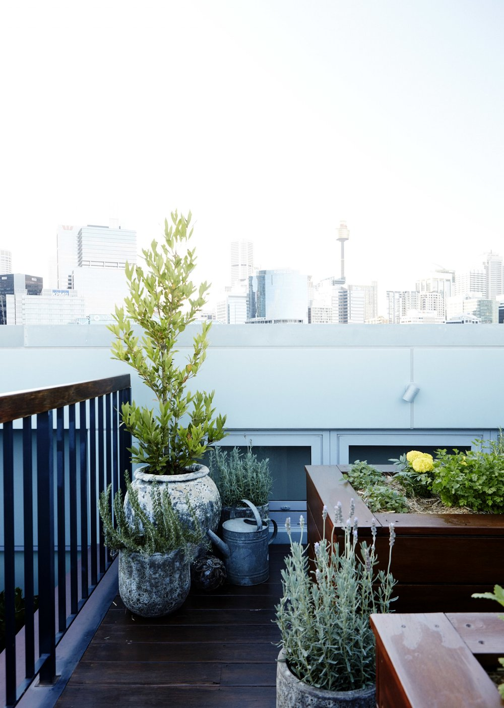 PYRMONT ROOFTOP