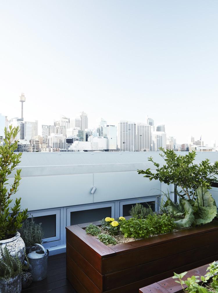 Eastern Suburbs - Sydney - Balcony Garden Design
