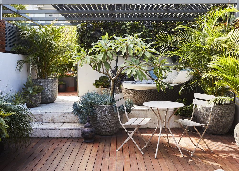 Alexandria Courtyard Garden Design - Outdoor Lounge - Plants - Sydney, Eastern Suburbs