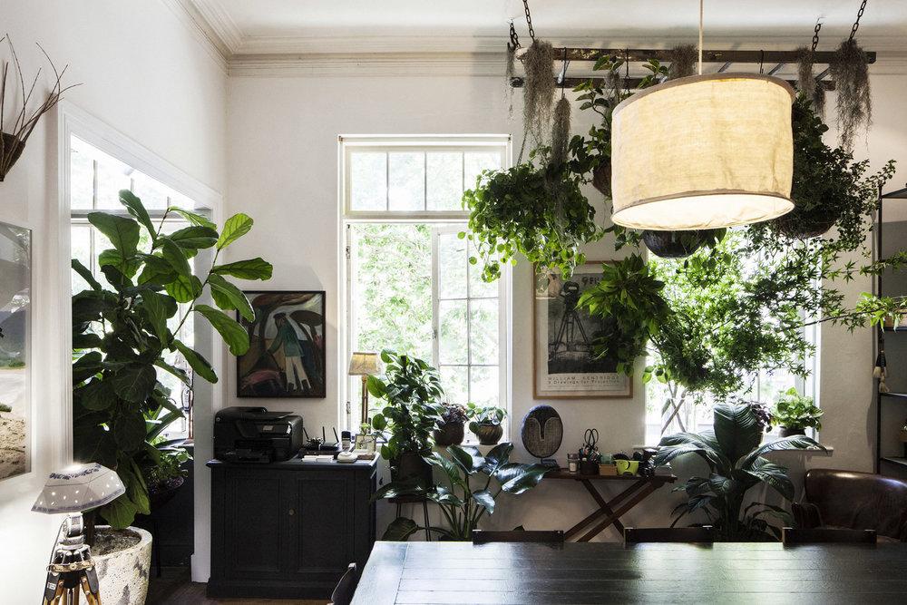 Green office - Kings Cross, Eastern Suburbs, Sydney - Indoor Garden Design