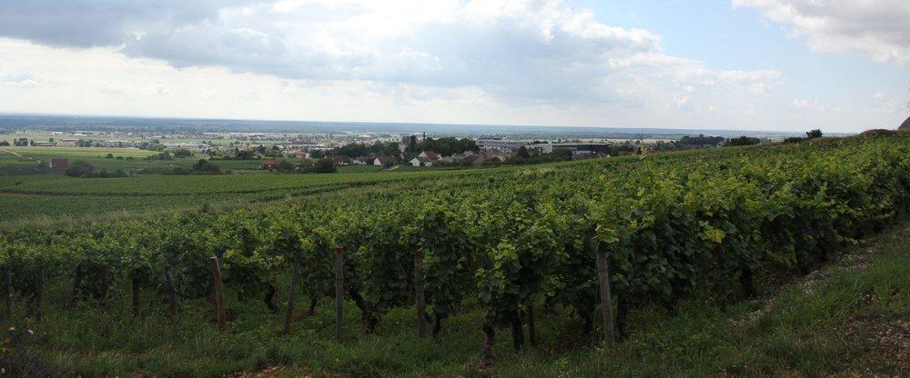 Part of Domaine Joilet's vineyards overlooking Fixin
