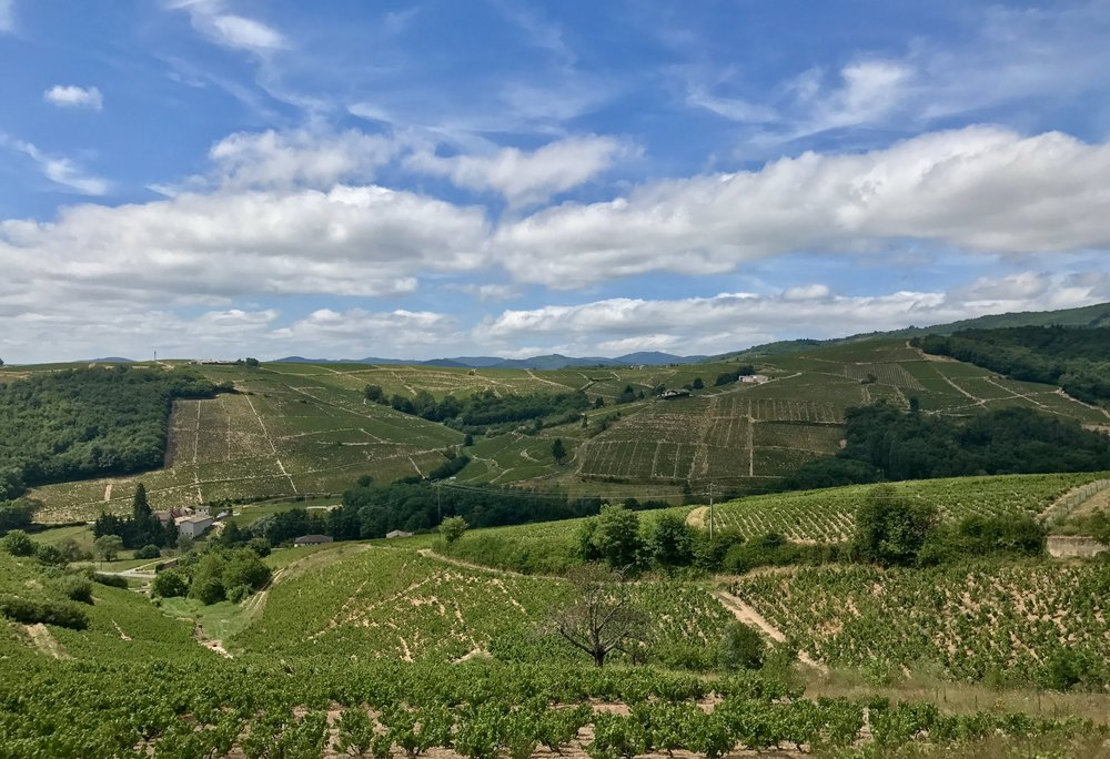 Hills and vineyards near Chiroubles in Beaujolais