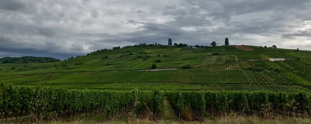Alsace's vineyards are mostly hilly