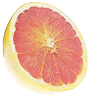 pink_grapefruit_half clipart.png