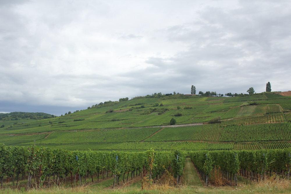 4. Route des Vins Alsace -