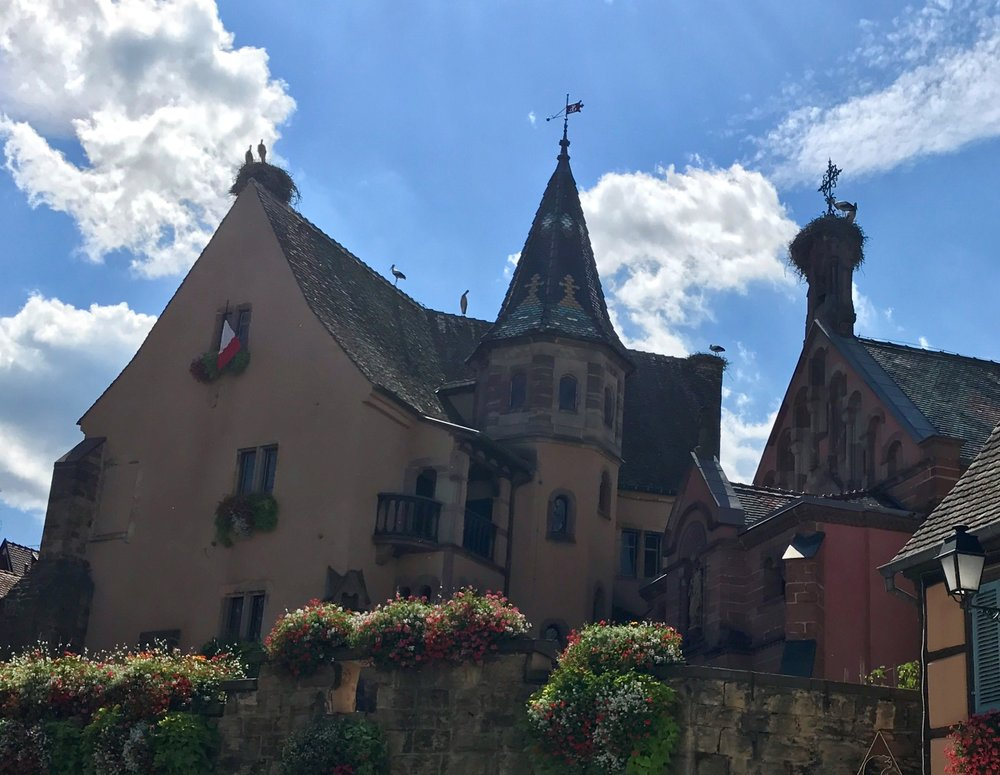 Some of Alsace's famous storks perched in Eguisheim