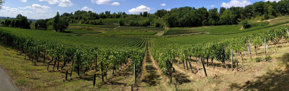 Vineyards on the right bank; Taken near Saint Emilion