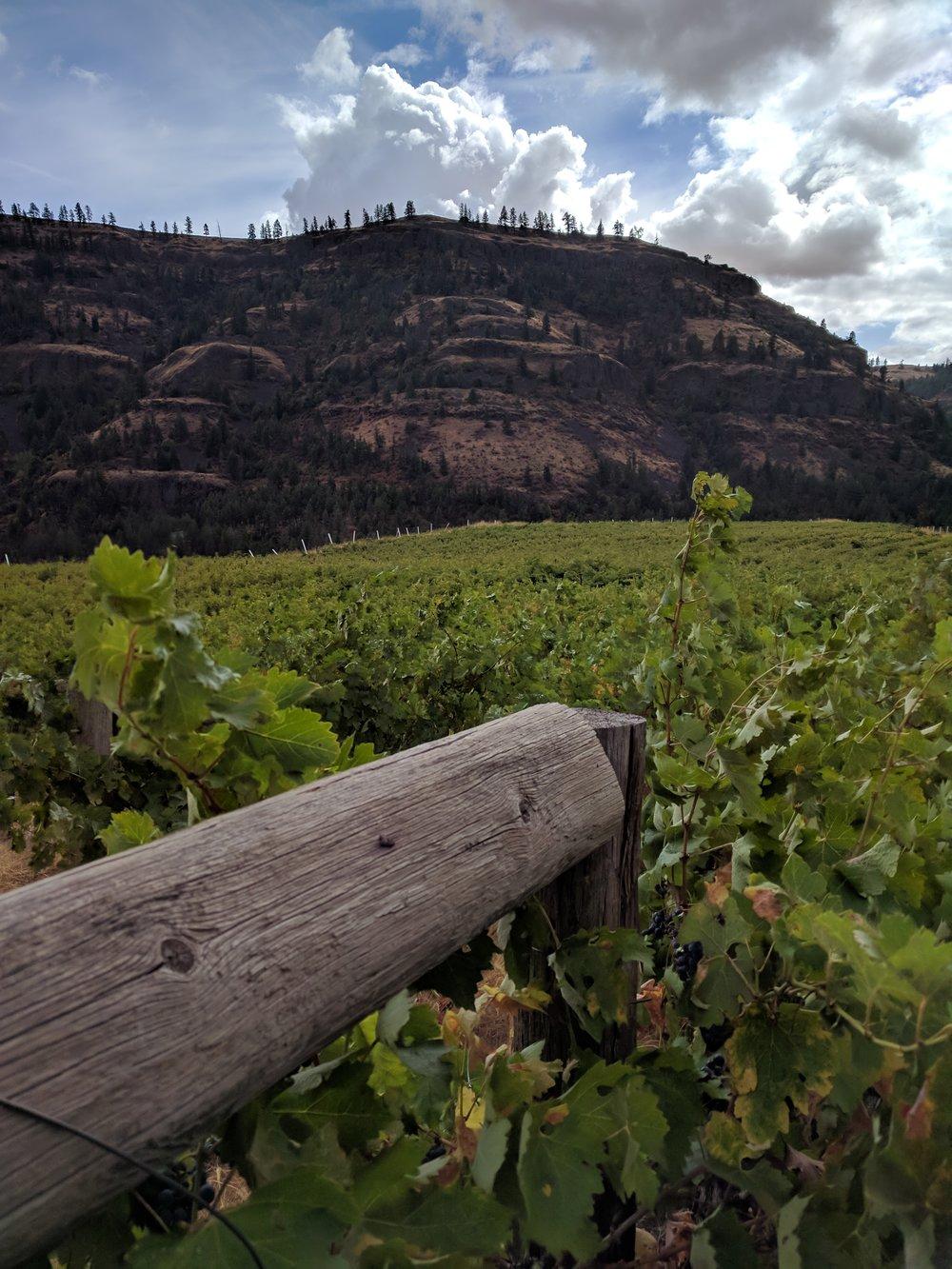 Whitestone's vines within Jump Canyon