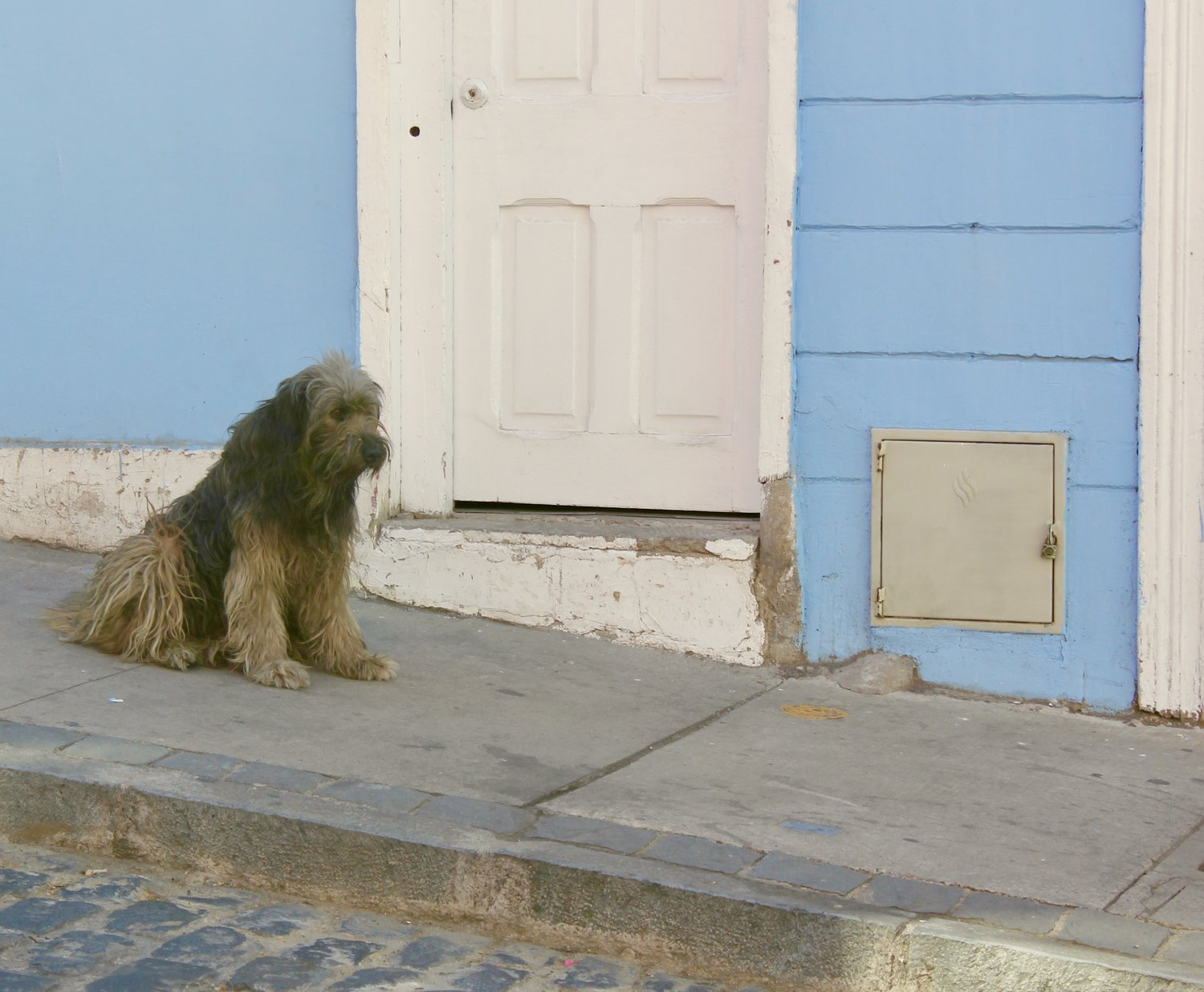 The Stray Dogs Of Valparaiso
