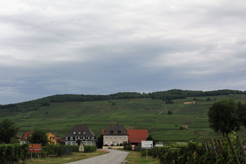 Alsace's rolling hills of vineyards