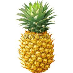 pineapple+clipart.jpg