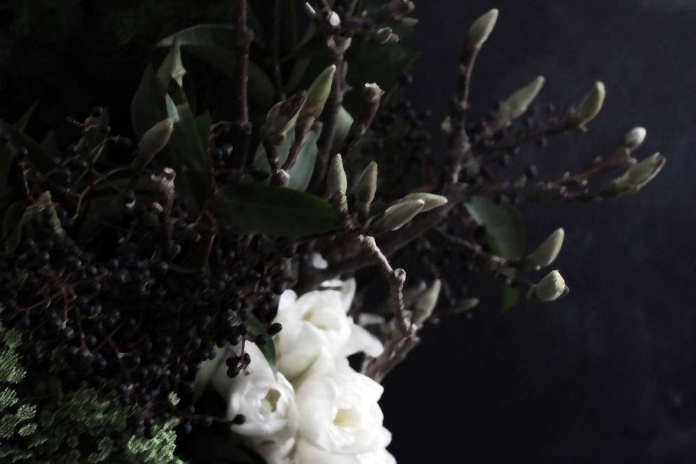 Florals_Darkness Abloom Magnolia.JPG