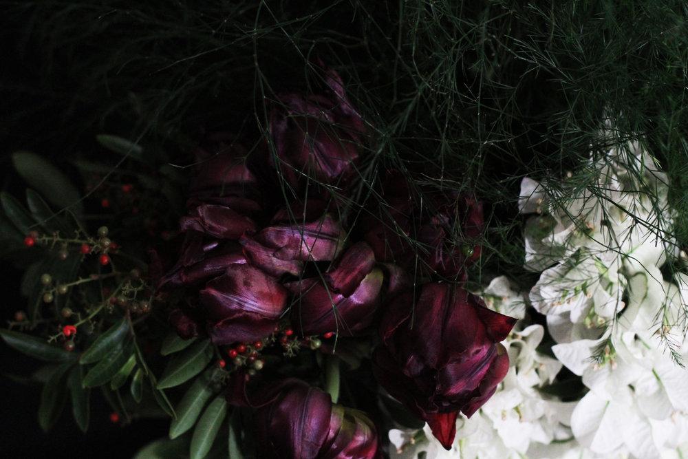 Tulip Close.jpg