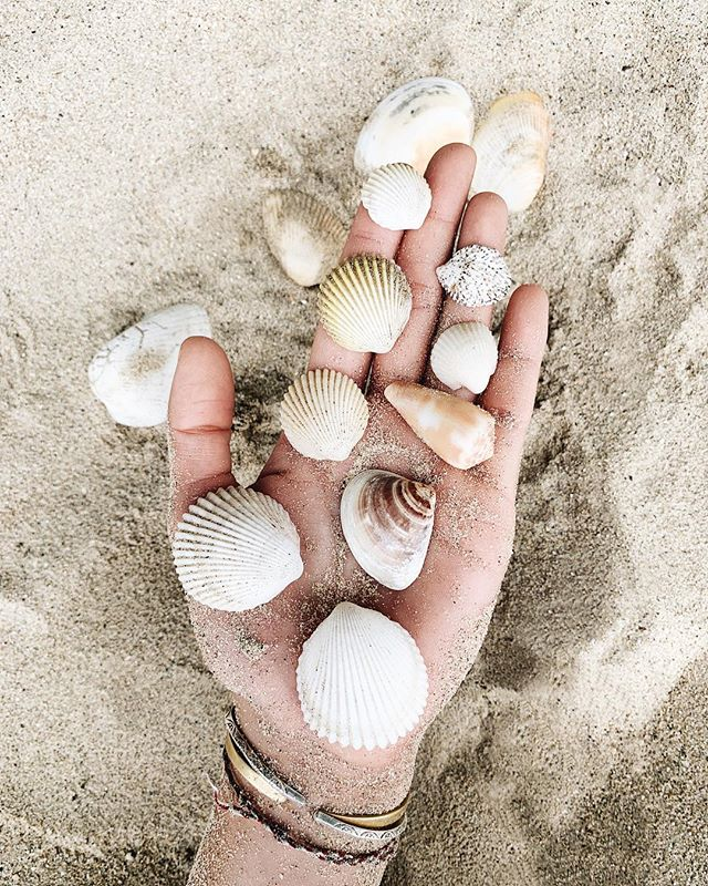 just 1/3 of my collection 🐚