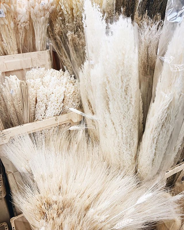 🌾All the best dried things 🌾