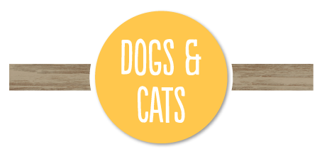 Ideas for Dogs, Cats and Pets in The Shopping Guide