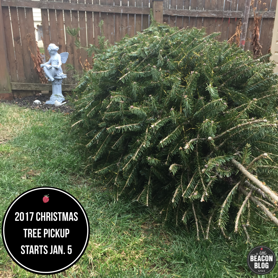 tis the season to clean your house from the holidays and take down the christmas tree you may be one of those who leaves the decorations up for the - When To Take Down Christmas Tree
