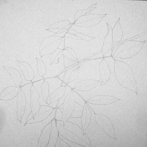Botanical Drawing at One NaturE