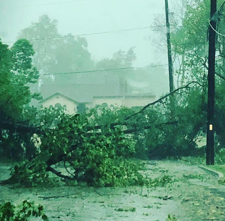 This Tree, down and blocking Willow Street, was Cleared away two days after the storm.  Photo Credit:  Dana Devine O'Malley