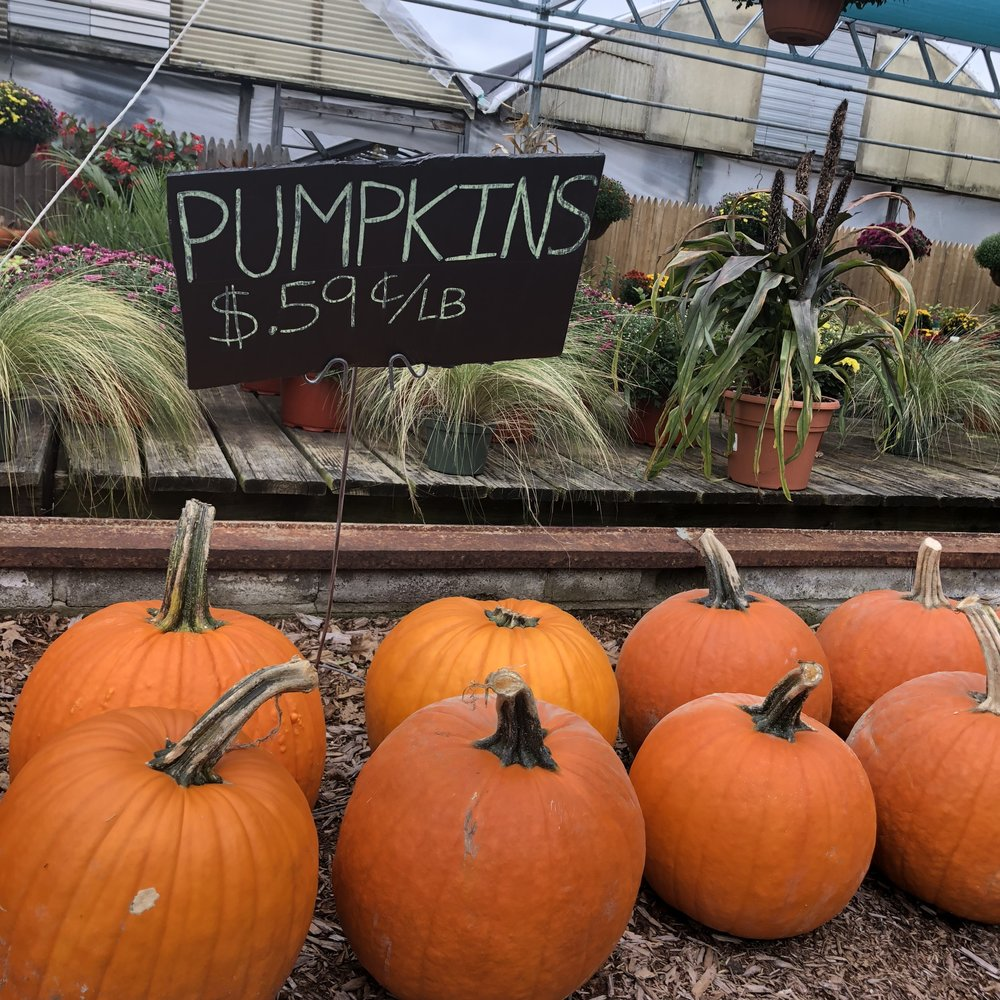 Pumpkins And Corn Stalks For Home Decor At Sunny Gardens On 9D U2014 A Little  Beacon Blog
