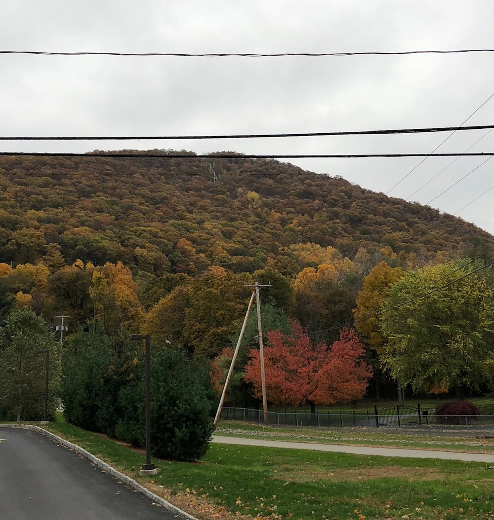 View from across the street of 119 Howland Avenue during the fall foliage.  Photo Credit: Katie Hellmuth Martin