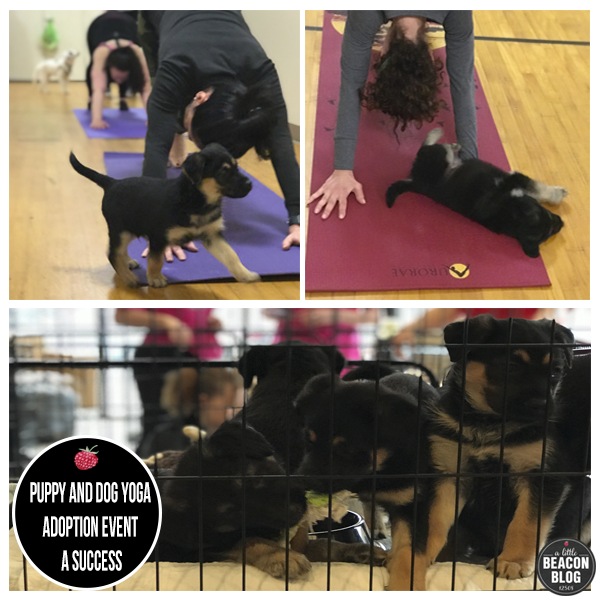 puppy_yoga.png