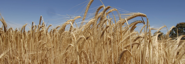 Evaluating Agricultural Practices of SAB Miller's Suppliers
