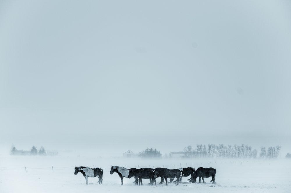Iceland -5.jpg
