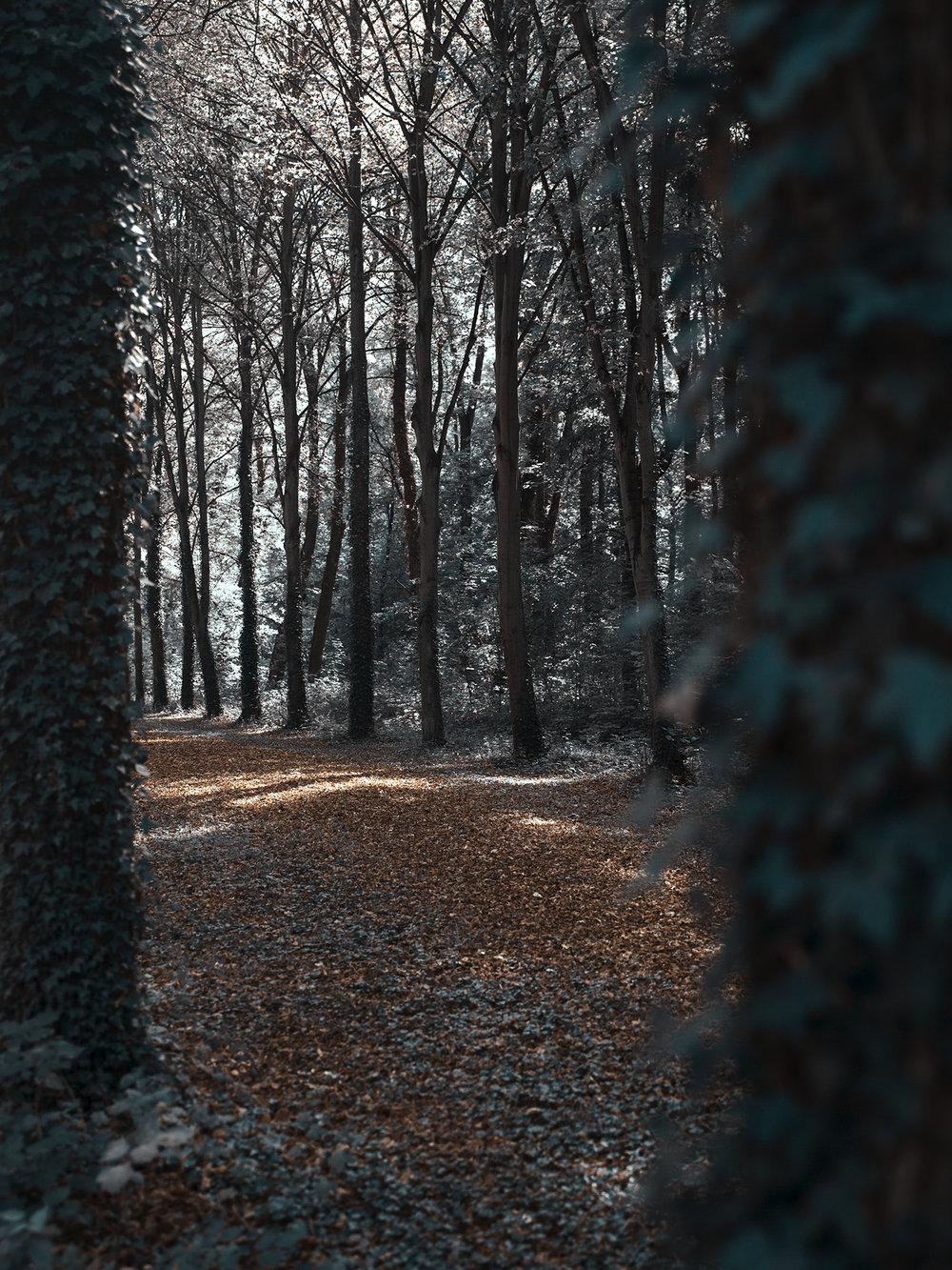 Versailles_Hasselblad0022.jpg