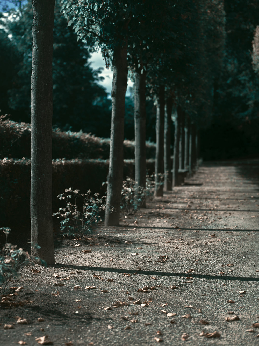 Versailles_Hasselblad0051.jpg