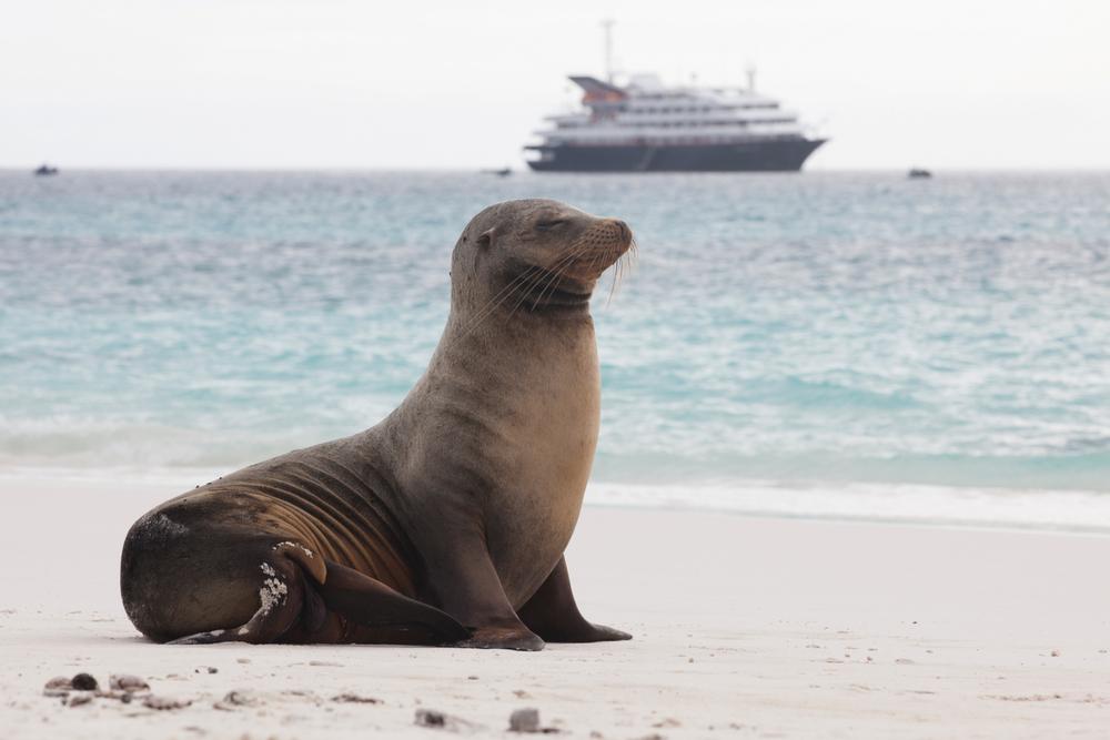 galapagos-sea-lion-silver-galapagos.jpg